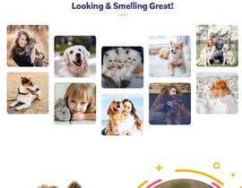 Nro 2 kilpailuun Create a website mockup for a business that offers pet health certificates käyttäjältä rishu123r