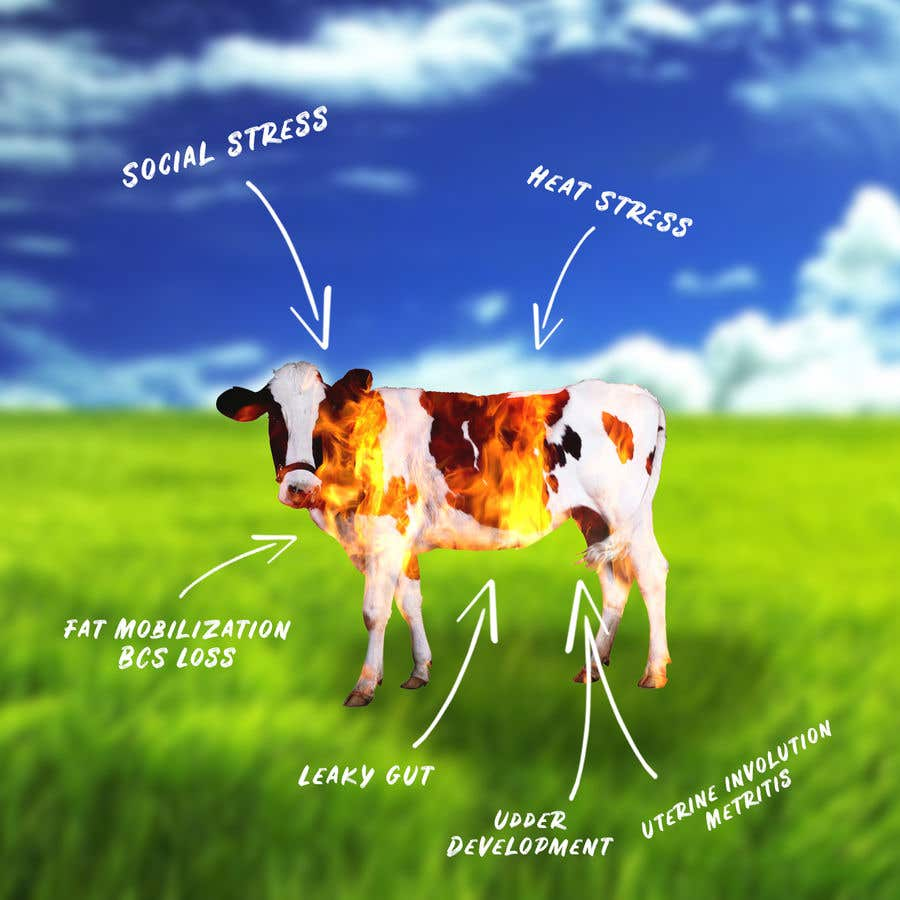 Contest Entry #                                        21                                      for                                         Make me a Cow Fire Graphic