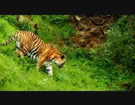 Nro 6 kilpailuun Tiger compositing into jungle käyttäjältä hossainmdsahadat