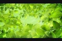 Farm business intro logo video için Video Services18 No.lu Yarışma Girdisi