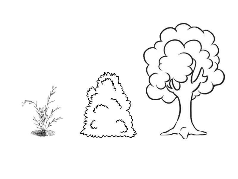 Penyertaan Peraduan #6 untuk Language illustrations 1