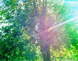 QuickPhoto tarafından Big Tree Photo edit için no 71