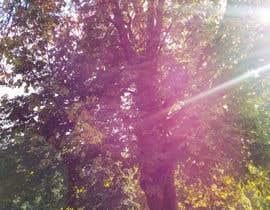 #47 untuk Big Tree Photo edit oleh tavicolu