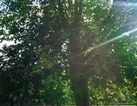 #5 untuk Big Tree Photo edit oleh suelentu