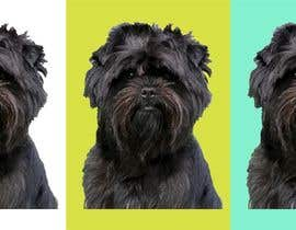 #21 for Affenpinscher dog converted to Pop Art af CaliCamoli