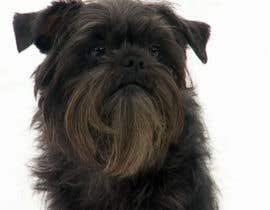#17 cho Affenpinscher dog converted to Pop Art bởi edumari