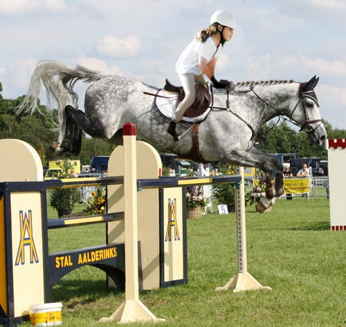 Bài tham dự cuộc thi #                                        55                                      cho                                         Horse jump photoshop
