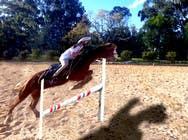 Bài tham dự #32 về Photoshop cho cuộc thi Horse jump photoshop