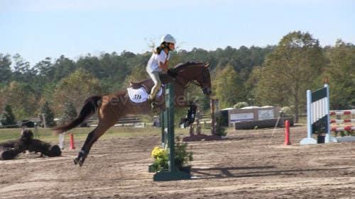 Bài tham dự cuộc thi #                                        43                                      cho                                         Horse jump photoshop