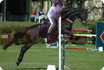Bài tham dự cuộc thi #                                        18                                      cho                                         Horse jump photoshop