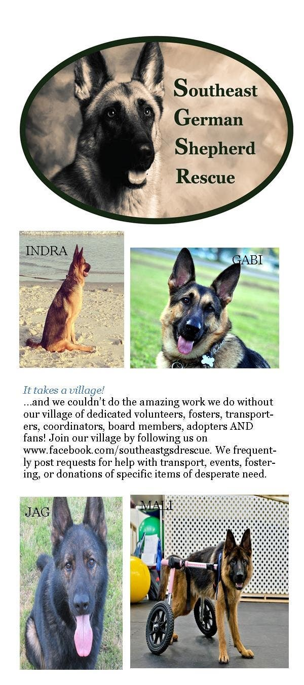 Inscrição nº 2 do Concurso para Design a Brochure for Southeast German Shepherd Rescue