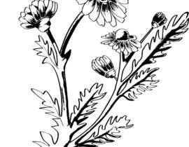 #7 para Botanical illustrations: 3 flowers for product labels por morganaandreea