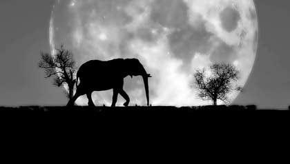 Prajeesh007 tarafından Create a Logo Animation: Pink walking elephant için no 22