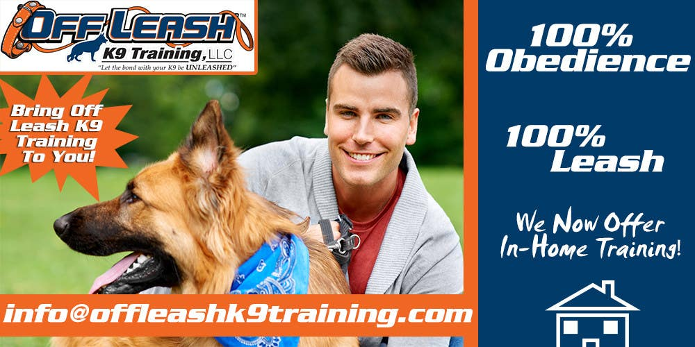 #11 for Design an Advertisement for Dog Training Business by videoeditingmx