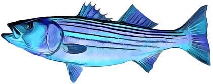 vishvjeetcheema tarafından Create fish art from photographs için no 17
