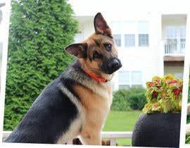 #8 for Design a Banner for Southeast German Shepherd Rescue Website by arman0464