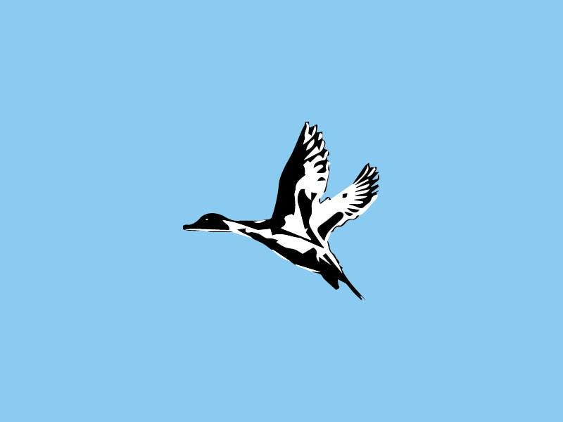 Penyertaan Peraduan #                                        8                                      untuk                                         Pintail Duck