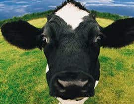 #9 para Create a Tinder Profile for a Cow searching for love de elagustinrojas