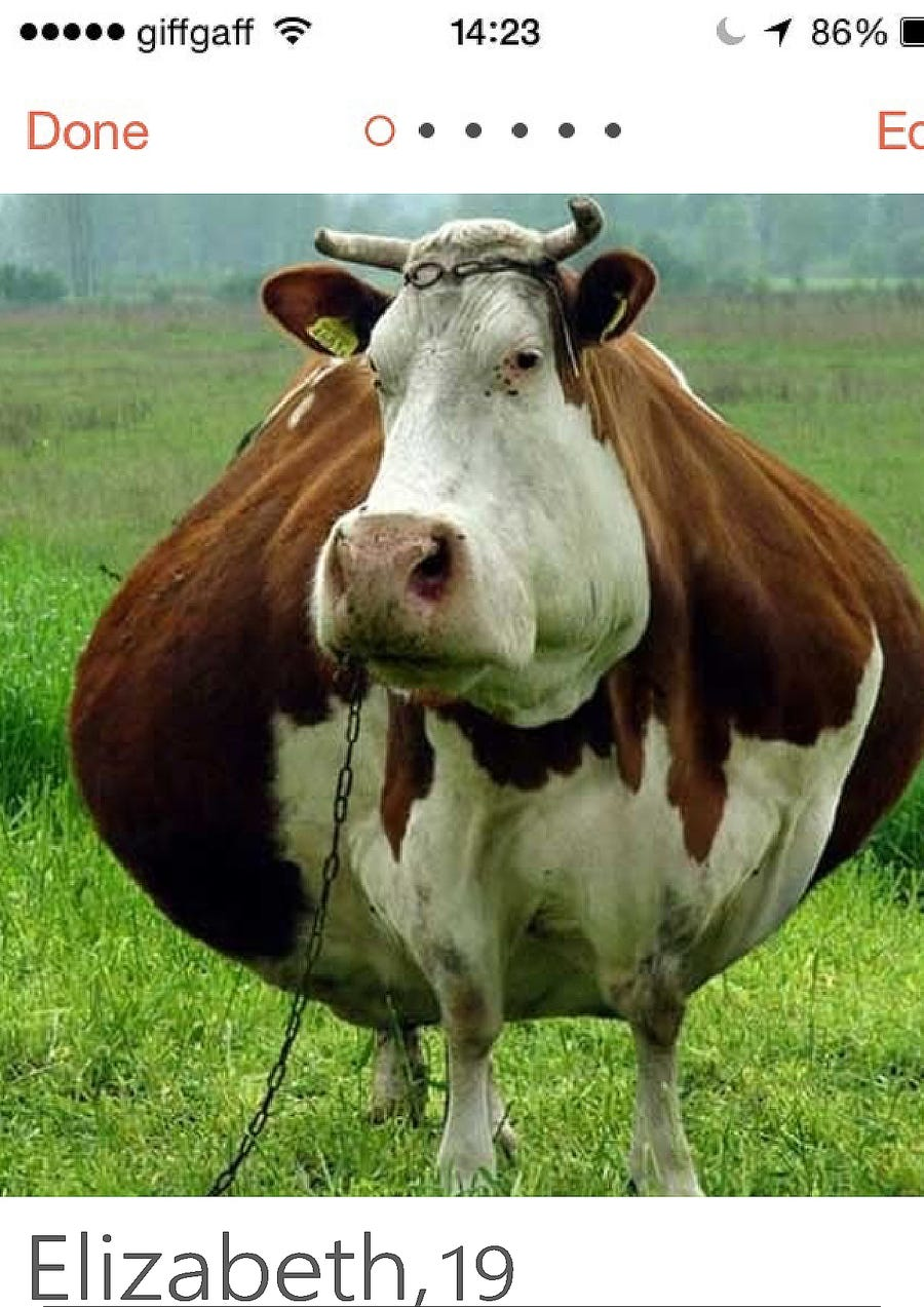 #10 para Create a Tinder Profile for a Cow searching for love de elagustinrojas
