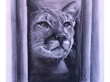 I can paint the portraits of your loved ones and pets in pencil drawing or watercolor.