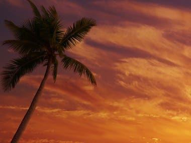 A sunny shot ---> Dramatic Sunset