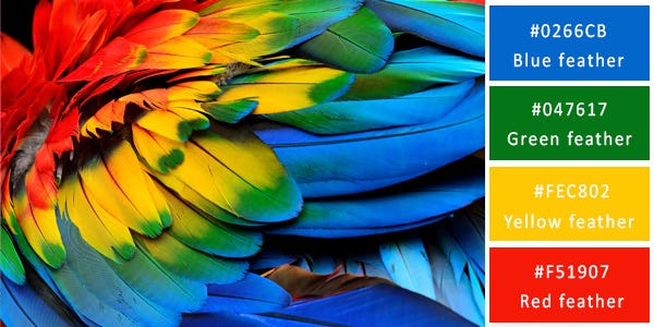 rich color combination - feathers