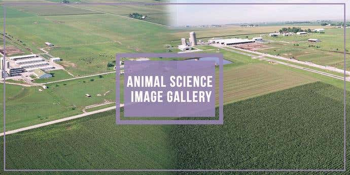 Two free, awesome pictures taken from Animal Science Image Gallery