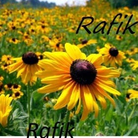 Profile image of rafik11111111