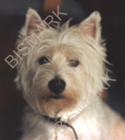 Profile image of whitedogxpress